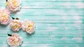 Las peonías rosadas blandas florecen en fondo de madera de la turquesa imagen de archivo