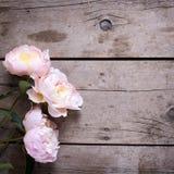 Las peonías rosadas frescas florecen en fondo de madera del vintage Imagenes de archivo