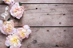 Las peonías rosadas frescas florecen en fondo de madera envejecido fotos de archivo libres de regalías