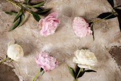 Las peonías rosadas frescas florecen en fondo de madera envejecido Endecha plana Visión superior con el espacio de la copia Image fotos de archivo libres de regalías