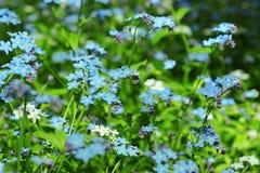 Las pequeñas flores azules florecen en el prado fotos de archivo libres de regalías