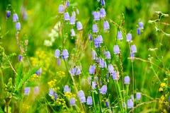 Las pequeñas flores en el prado Imagen de archivo