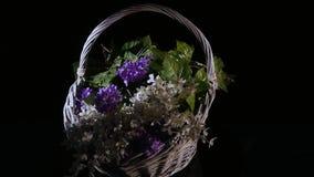 Las pequeñas flores púrpuras en una cesta de mimbre giran aislado en un fondo negro almacen de video