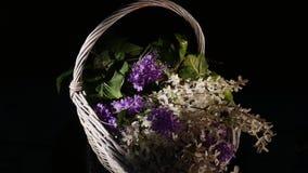 Las pequeñas flores púrpuras en una cesta de mimbre giran aislado en un fondo negro metrajes