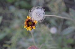 Las pequeñas flores salvajes sienten bien a amigos Imágenes de archivo libres de regalías