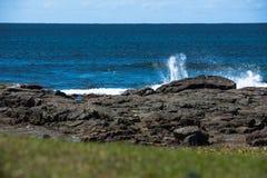 Las pequeñas olas oceánicas se estrellan en rocas con la hierba en primero plano Fotografía de archivo libre de regalías