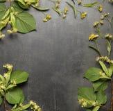 Las pequeñas ramitas y flores del tilo alinearon con el marco, en gris Imagen de archivo