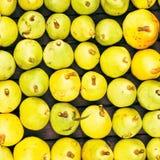 Las peras amarillas recientemente escogidas en los granjeros comercializan el primer, pueden utilizar imagen de archivo libre de regalías