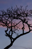 Las Perlas archipelago Royalty Free Stock Images