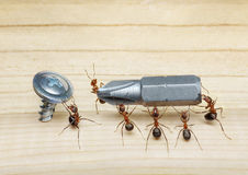 Las personas de hormigas llevan el destornillador, trabajo en equipo