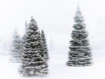 Las piceas verdes jovenes en el parque del invierno se cubren con nieve blanca fresca durante las nevadas fotos de archivo libres de regalías