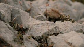 Las piedras caen y ruedan abajo cerca para arriba almacen de metraje de vídeo