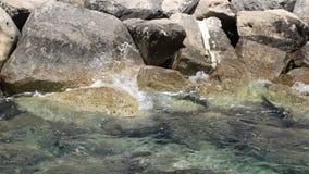 Las piedras grandes de la orilla cierran la visión almacen de metraje de vídeo