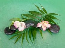 Las piedras mojadas y el alstroemeria florecen en la hoja del howea Fotografía de archivo