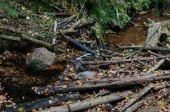 Las piedras ramifican y las hojas caidas en el agua Fotos de archivo