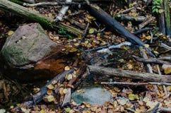 Las piedras ramifican y las hojas caidas en el agua Fotos de archivo libres de regalías
