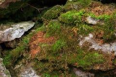 Las piedras rocosas se cubren con el musgo, setas Bosque Foto de archivo libre de regalías