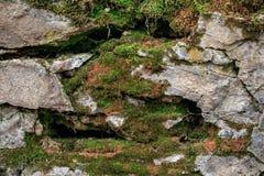 Las piedras rocosas se cubren con el musgo, setas Bosque Foto de archivo