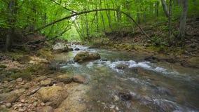 Las piedras y las rocas cubiertas por el musgo a lo largo del agua fluyen atravesando el bosque verde del verano metrajes