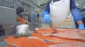 Las pieles de salmones están consiguiendo clasificadas después de emerger de la máquina de la fábrica metrajes
