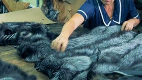 Las pieles forradas de piel de los animales del mustelid están consiguiendo dadas vuelta alrededor y almacenadas juntas almacen de metraje de vídeo