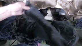 Las pieles forradas de piel preparadas para coser están consiguiendo vueltas a poner por las manos femeninas almacen de metraje de vídeo