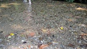 Las piernas de la mujer caminan con corriente del arroyo de la corriente del parque metrajes
