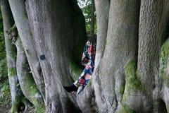 Las piernas de la señora en la hendidura de los árboles de haya imágenes de archivo libres de regalías