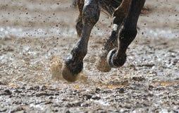 Las piernas del caballo en el agua Fotos de archivo