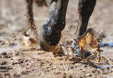 Las piernas del caballo en el agua Foto de archivo libre de regalías
