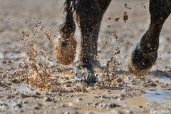 Las piernas del caballo en el agua sucia Foto de archivo