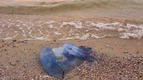Las piernas del hombre están pasando por muerto, medusas en agua de mar baja almacen de metraje de vídeo
