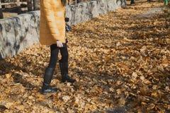 Las piernas femeninas bien proporcionadas que caminan el otoño amarillean follaje Foto de archivo