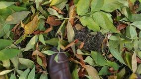 Las piernas femeninas en botas marrones van en follaje de otoño en el parque almacen de metraje de vídeo