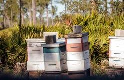 Las pilas de abeja del langstroth encorchan con volar de las abejas Imágenes de archivo libres de regalías