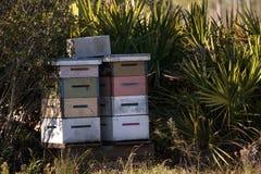 Las pilas de abeja del langstroth encorchan con volar de las abejas Fotos de archivo