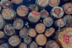 Las pilas de madera registran el fondo imagen de archivo