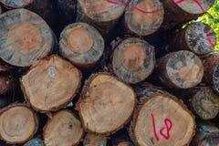 Las pilas de madera registran el fondo foto de archivo