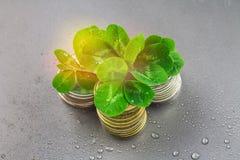 Las pilas de monedas rusas con el trébol se van en un fondo gris con las gotitas del agua Día de s de StPatrick ' Fotos de archivo