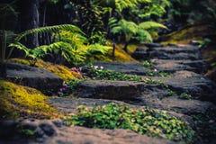 Las pistas de senderismo que simulan bosques tropicales viajan fotografía de archivo libre de regalías