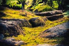 Las pistas de senderismo que simulan bosques tropicales viajan imagen de archivo libre de regalías