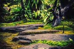 Las pistas de senderismo que simulan bosques tropicales viajan fotos de archivo libres de regalías