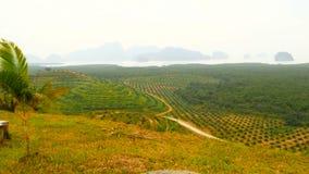 Las plantaciones de las filas de la palmera del aceite se ven desde arriba Paisaje tropical almacen de video