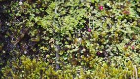 Las plantas alpinas de la vegetación se cierran para arriba metrajes