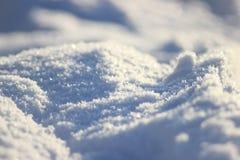 Las plantas congeladas de la pureza de la frescura de Frost se colocan en nieve fotografía de archivo