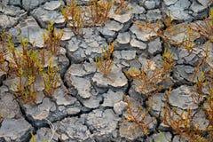 Las plantas crecen en el suelo seco Fotos de archivo libres de regalías
