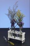 Las plantas crecen en tubos Fotografía de archivo