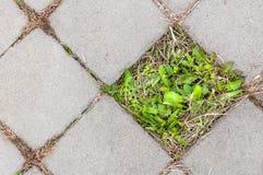 Las plantas crecen fuera del hormigón fotos de archivo libres de regalías