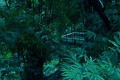 Las plantas de bambú del balcón de los árboles afilan a Forest Tropical Background fotos de archivo libres de regalías