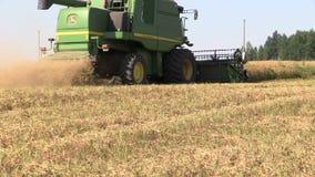 Las plantas de guisante secas maduras de la cosecha de la máquina de la cosechadora crecen en campo de granja metrajes